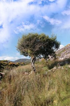Free Strong Isolated Mountain Tree Stock Images - 21021494