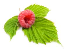 Free Raspberries Stock Photo - 21021900