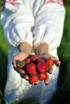 Free Handful Of Strawberries In Hands Royalty Free Stock Photography - 21022157