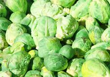 Free Brussel Sprouts Royalty Free Stock Photos - 21024598
