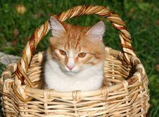 Free Kitten In A Basket Stock Photo - 21026210