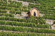 Free Vineyard Stock Image - 21026591
