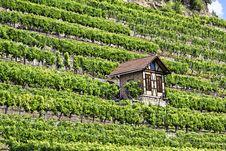 Free Vineyard Stock Images - 21026764