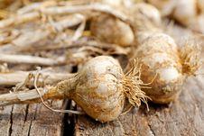 Free Biological Garlics Stock Photos - 21027093
