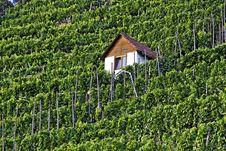 Free Vineyard Royalty Free Stock Photo - 21027615