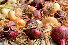 Free Biological Onions Stock Photo - 21027750