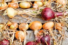 Free Biological Garlics And Onions Royalty Free Stock Photos - 21027828