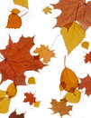 Free Colorful Autumn Leaves Stock Photography - 21033392
