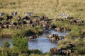Free Wildebeest In Migration Royalty Free Stock Photography - 21035667