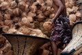 Free Move Coconut Stock Image - 21037851
