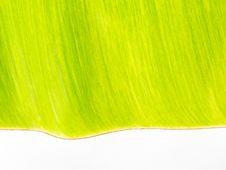 A Green Banana Leaf Stock Photos