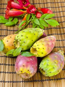 Free Prickly Pear Stock Photos - 21030443