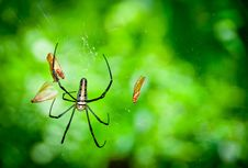 Free Giant Wood Spider Stock Photography - 21032582