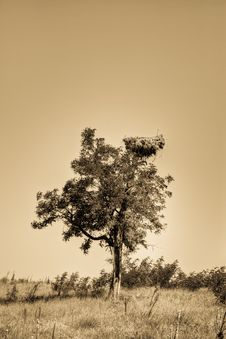 Free Stork Nest In A Tree Royalty Free Stock Photo - 21032965