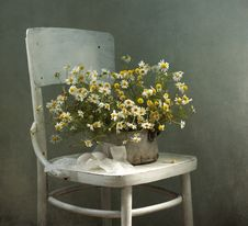 Free Bouquet Of Camomiles And Chair Royalty Free Stock Photo - 21034475