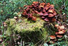 Mushrooms On A Treestump Stock Image