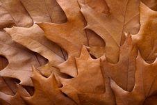 Free Autumn Leaves. Stock Image - 21035311