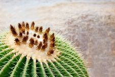 Free Round Tropical Cactus Royalty Free Stock Photos - 21035598