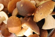 Group Of Edible Mushrooms Close Up Royalty Free Stock Photography