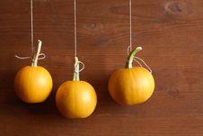 Free Hanging Pumpkins Stock Image - 21037511