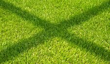 Free The Shadow On The Green Grass. Stock Photo - 21038060
