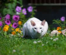 Free The White Cat Royalty Free Stock Photography - 21039997