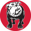 Free Bulldog Mongrel Dog Front View Stock Photo - 21044570
