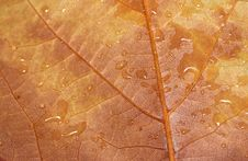 Free Wet Autumn Leaf - RAW Format Stock Image - 21040021