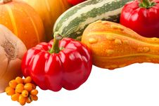 Free Autumn Harvest On Isolated White Royalty Free Stock Images - 21040309