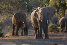 Free Elephant Herd In The Forest Stock Photo - 21041680
