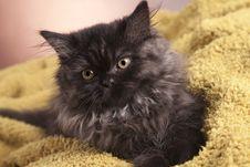 Free Young Cat Stock Photos - 21044183