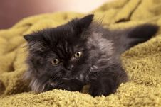Free Young Cat Royalty Free Stock Photography - 21044187
