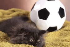 Free Young Cat Stock Images - 21044194