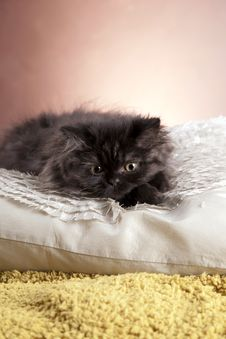 Free Young Cat Royalty Free Stock Photography - 21044197