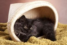 Free Young Cat Stock Photo - 21044200