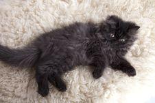 Free Young Cat Stock Photos - 21044223