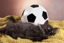 Free Young Cat Stock Photo - 21044250