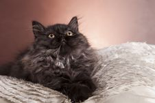 Free Young Cat Royalty Free Stock Photography - 21044257