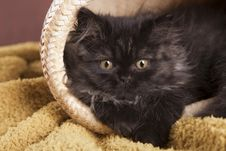 Free Young Cat Stock Photos - 21044263