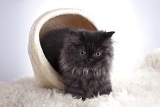 Free Young Cat In Basket Stock Images - 21044284