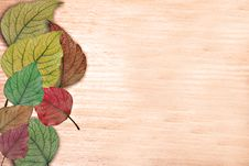 Free Background With The Multi-coloured Leaves Stock Photography - 21044402
