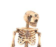 Free Skeleton Stock Photos - 21045723