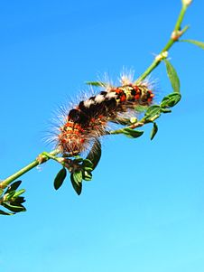 Free Multi-colored Fluffy Caterpillar Stock Photography - 21047012