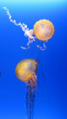 Free Jellyfish Stock Image - 21047541