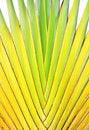 Free Banana Stem Stock Photo - 21050980