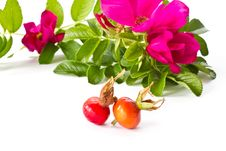 Fruits And Flowers Hips Stock Image