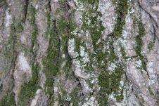 Free Bark And Moss Royalty Free Stock Images - 21050639