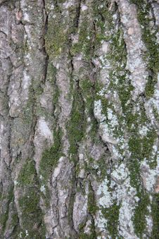 Free Bark And Moss Stock Photo - 21050670