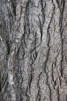 Free Tree Bark Stock Photography - 21050702