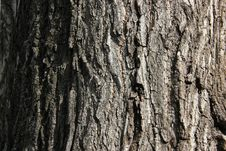 Free Tree Bark Stock Images - 21050954